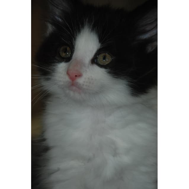 Photo of Billy~Small In Size, Big In Cuteness
