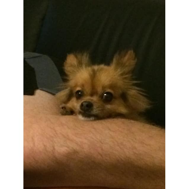 Photo of Diamond (Dolly)