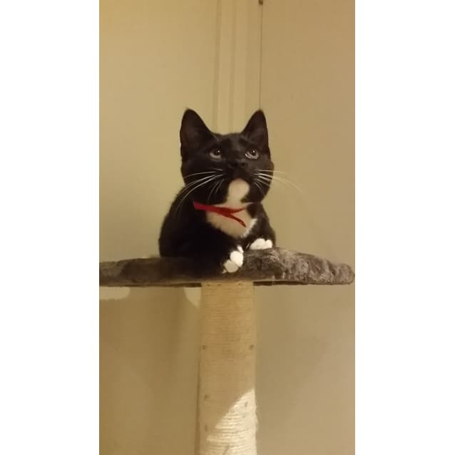 Photo of Luna (Located In Brunswick)