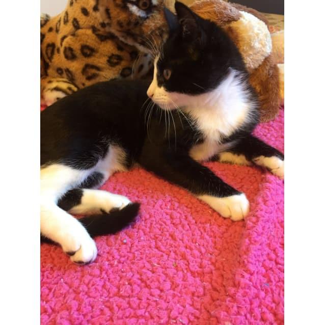 Photo of Tuxie