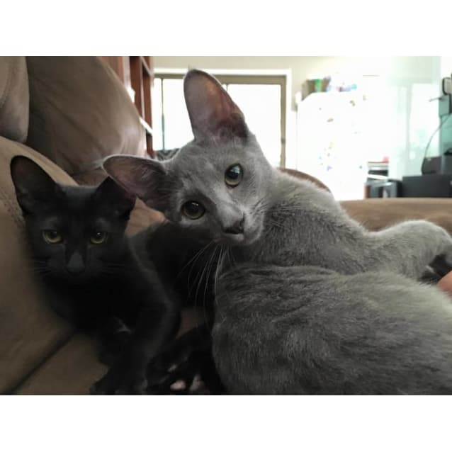 Photo of Missy  Adoption Pending