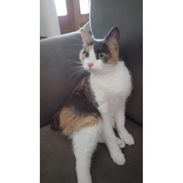 Photo of Marigold