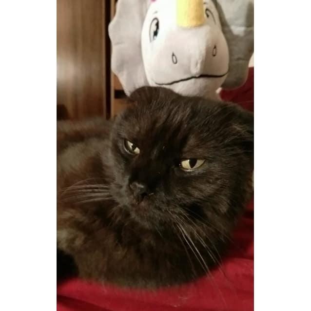 Photo of Primus
