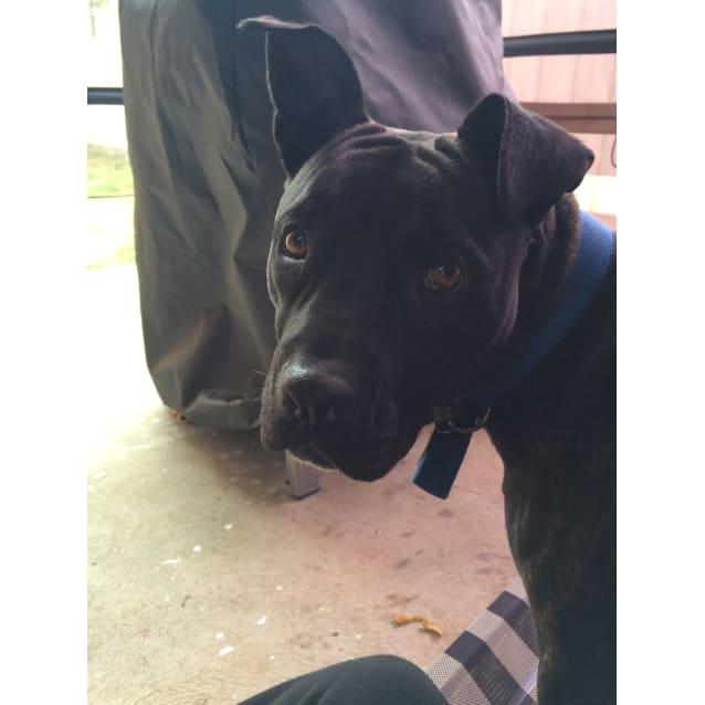 Photo of Cheyenne *Urgent Foster Needed*
