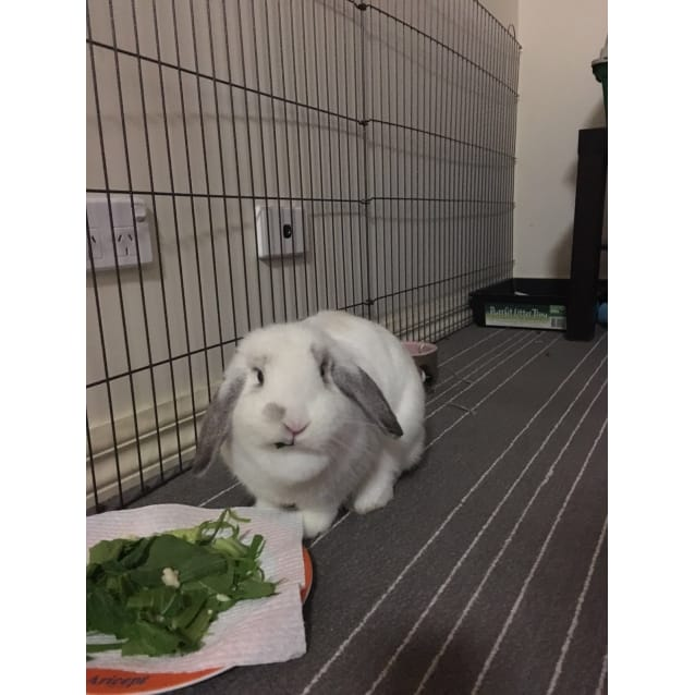 Photo of Mollie Dewlap