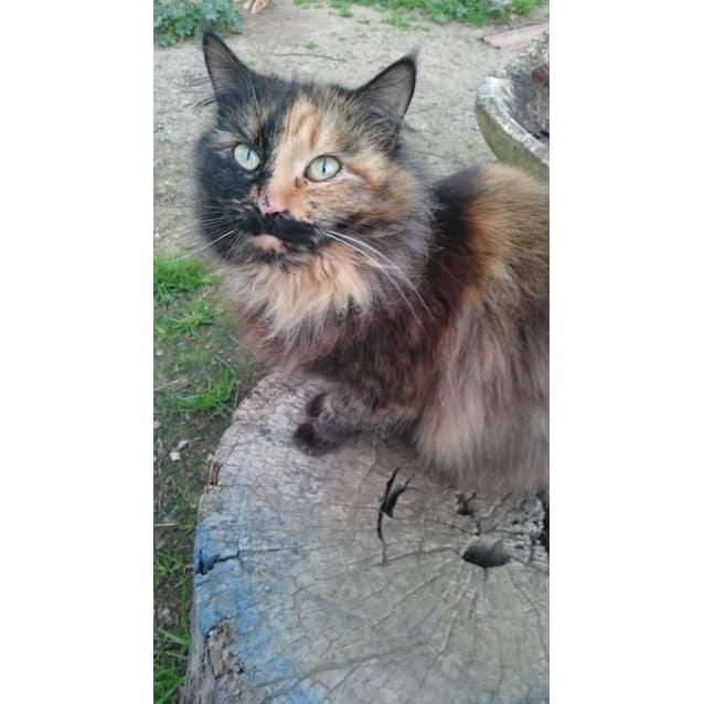 Photo of Cherie
