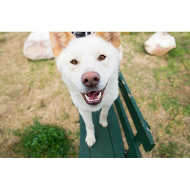 Photo of Fraser  Dingo