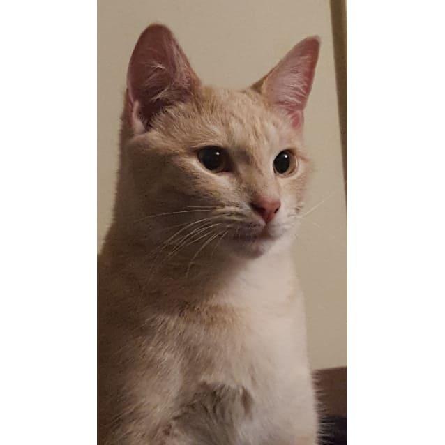 Photo of Tyga