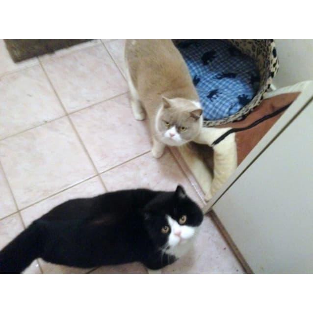 Photo of Buddy & Cherub