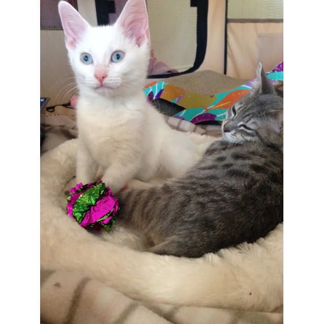 Photo of Aztec & Faith Looking For A Loving Home