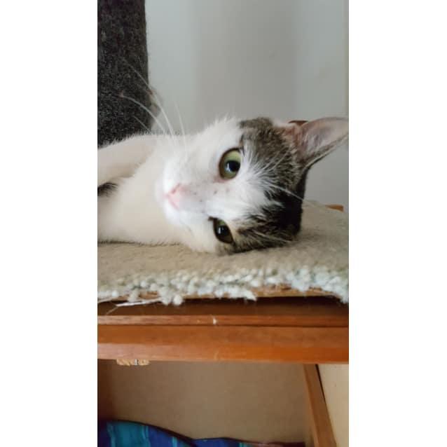 Photo of Jojo