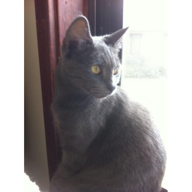 Photo of Simone