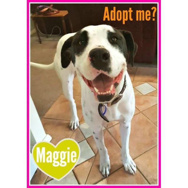 Photo of Maggie ~ Bull Arab X (On Trial 14/04/17)