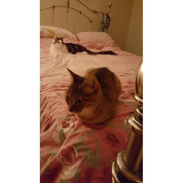 Photo of Darla & Cupie (Located In Mooroolbark)