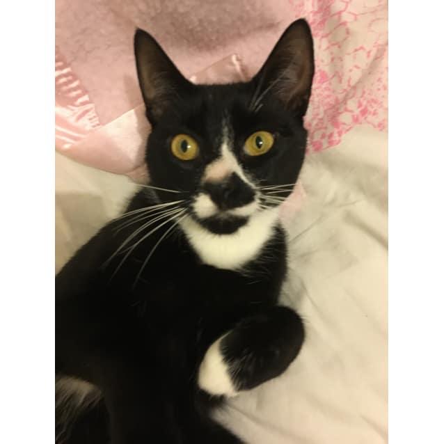 Photo of Watson