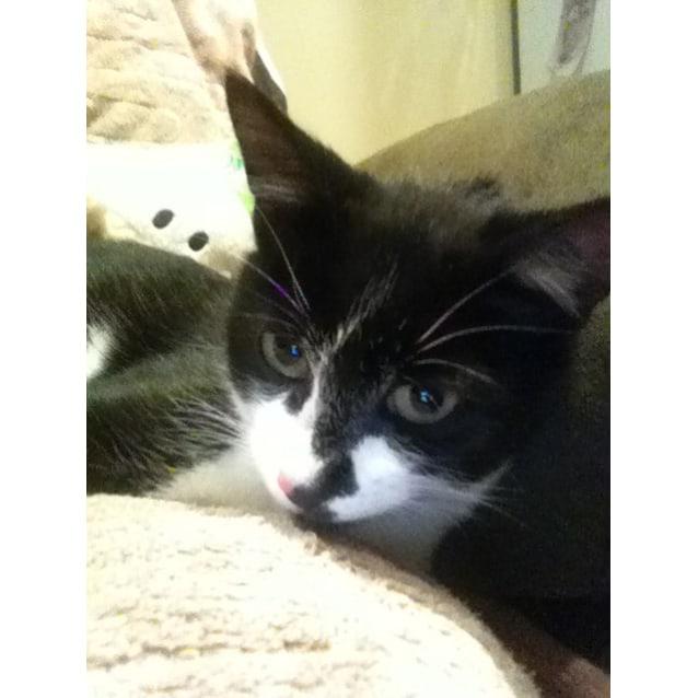 Photo of Jemima (Located In Cheltenham)