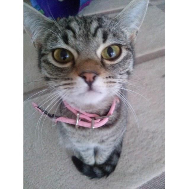 Photo of Zalie (Pronounced Zar Lee)