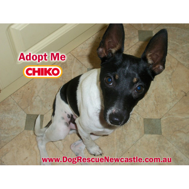 Photo of Chiko  (On Trial 20/4/15)