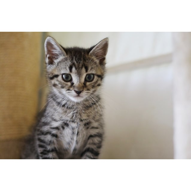 Photo of Pound Cats   Frankie