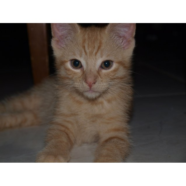 Photo of Aiden