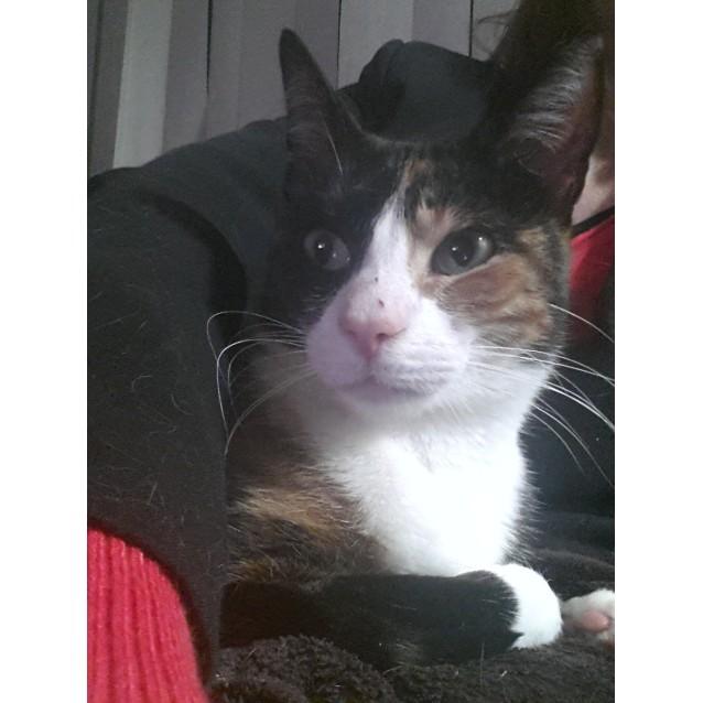 Photo of Angelina