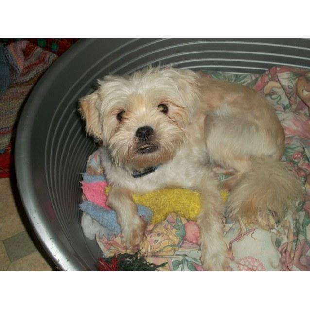 Photo of Benson (On Trial 7/1/15)