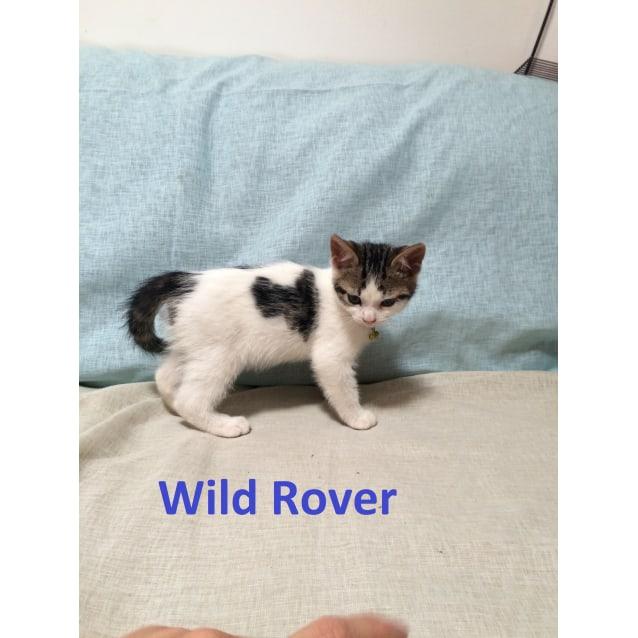 Photo of Wild Rover