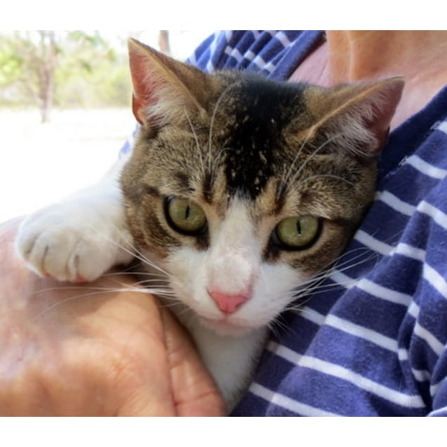 """Photo of """"Billy The Kid""""   Purrfect Match"""