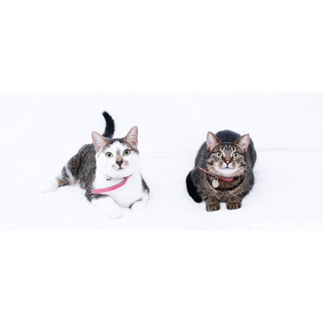 Photo of Pound Cats | Lotta And Lola
