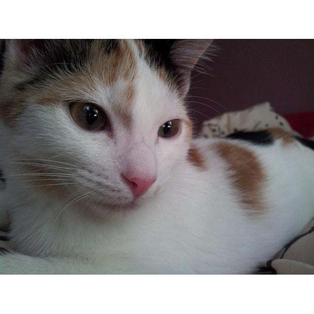Photo of Princess Peach
