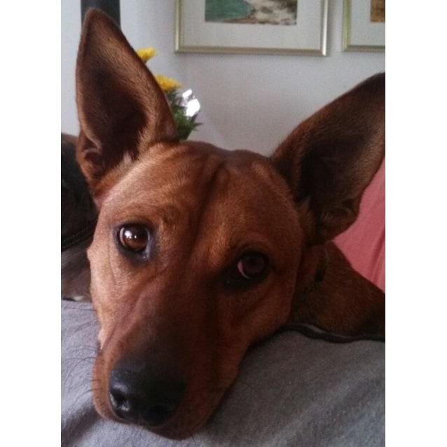 Photo of Suka