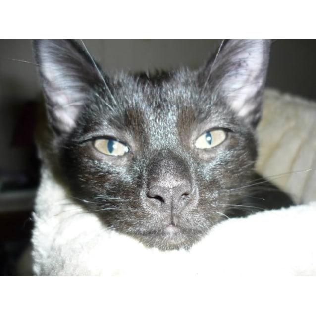 Photo of Gibbon