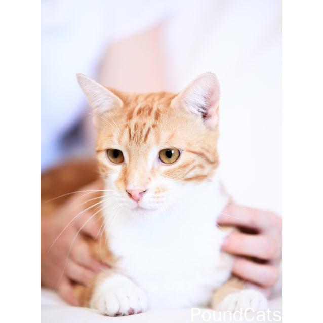 Photo of Pound Cats | Angus