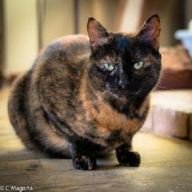 Photo of Mama Cat (Ec0005)