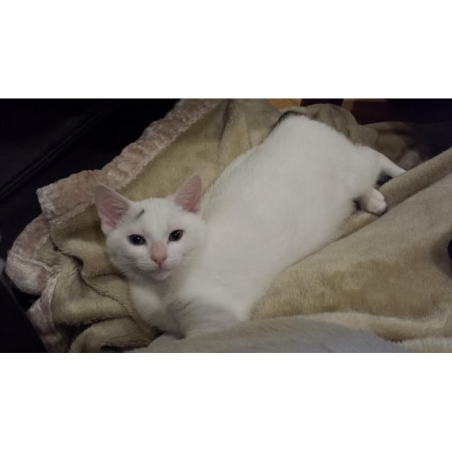 Photo of Gracie  (Located In Bulleen)