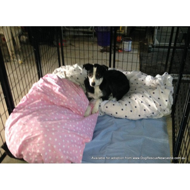 Photo of Tanzie (Pending Adopt Late Sept)~ I Have A Video ~