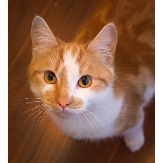Photo of Wesley