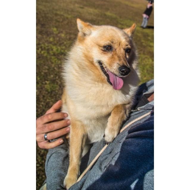 Photo of Corona ~ Special Needs ~ Rehomed 18/11/2014