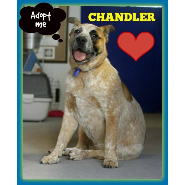 Photo of Puppy Chandler (On Trial 3/10/14)