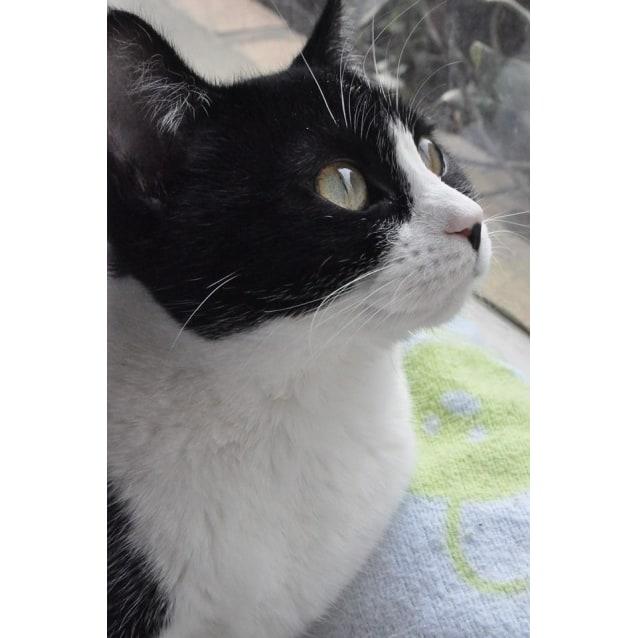 Photo of Missy (Located In Thornbury) **$50 Adoption**