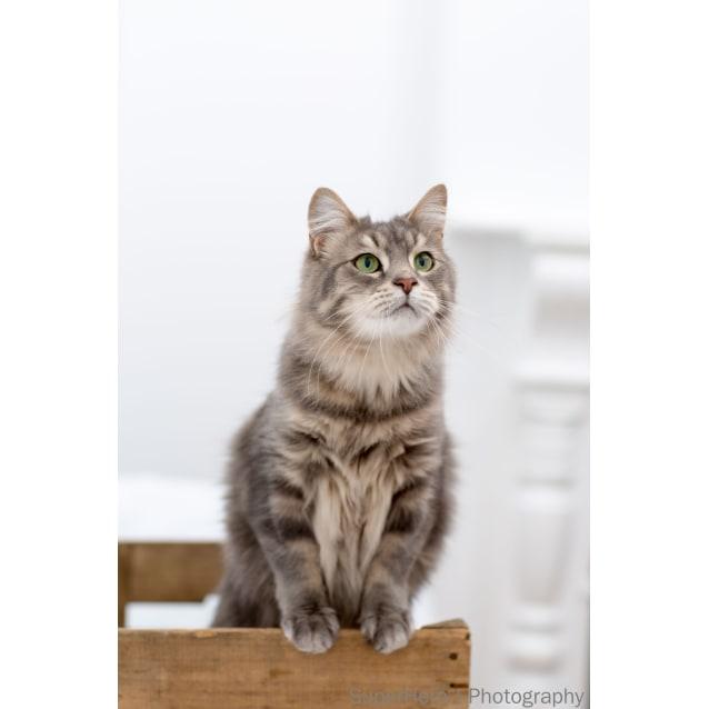 Photo of Pound Cats | Possum