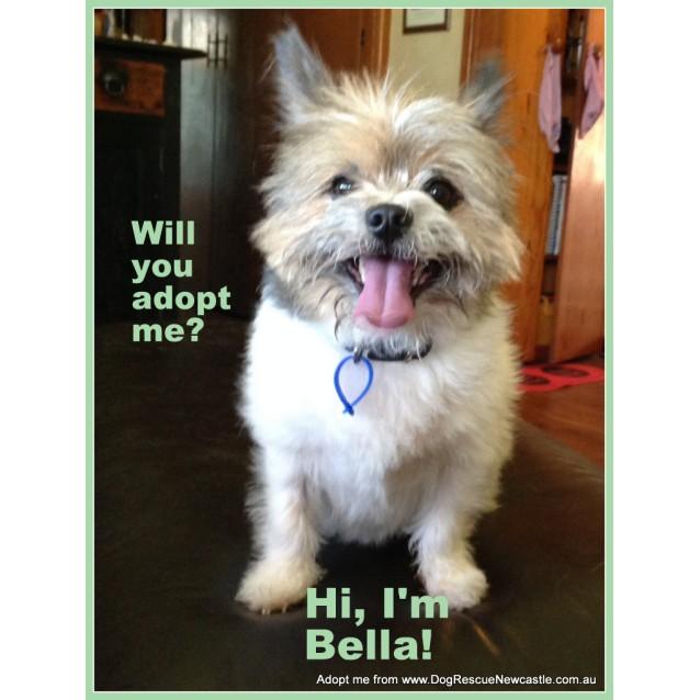 Photo of Bella The Shih Tzu X Silky (On Trial 29/10/14)