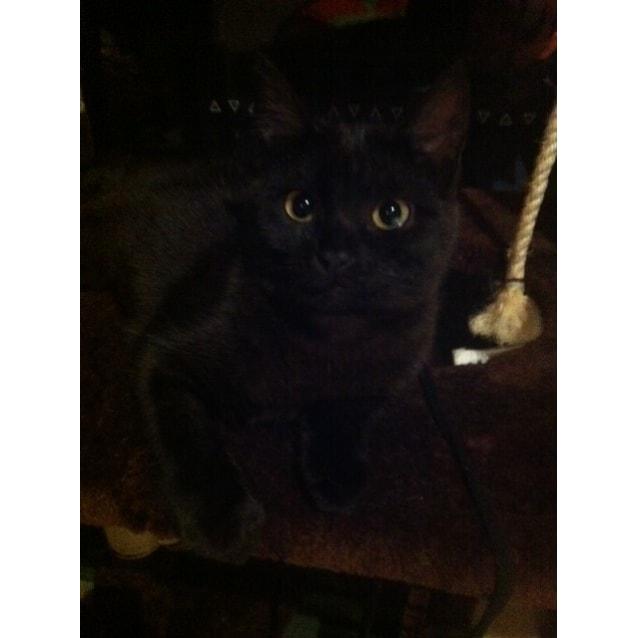 Photo of Ella & Louie~The Sweetest Kittens