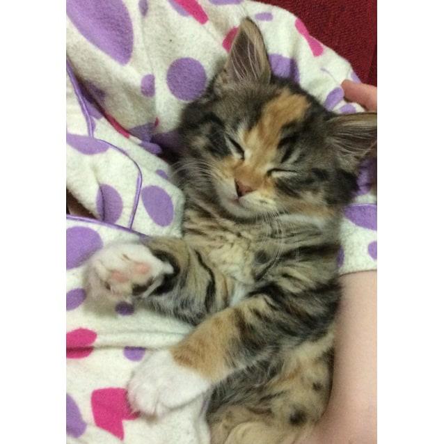 Photo of Amy
