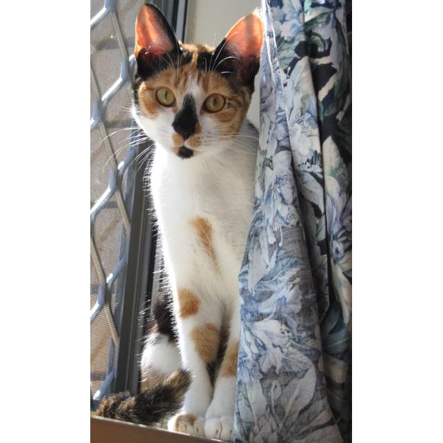 Photo of Jellybean   Kitten Kapers Rescue