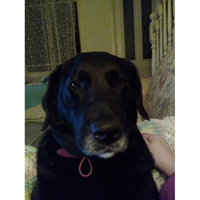 Photo of Zarlie