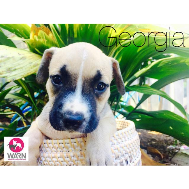 Photo of Georgia