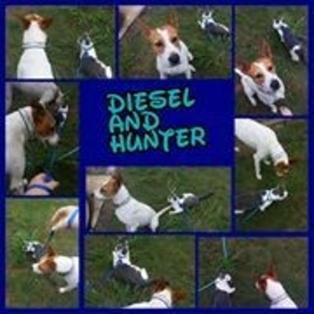 Photo of Diesel (Adoption Pending)
