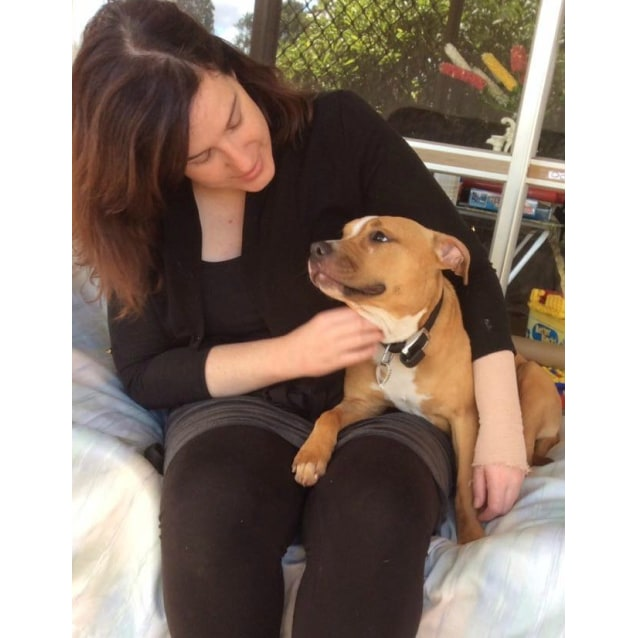 Photo of Lanie   Adoption Pending