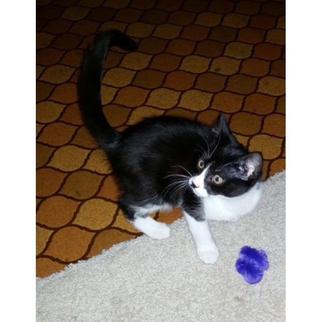 Photo of Minni (Located In Beaufort)